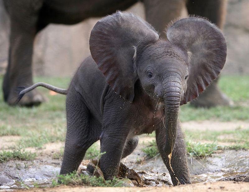 baby elephant // stephanieorefice.net